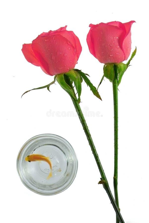 Romance pelas rosas fotografia de stock