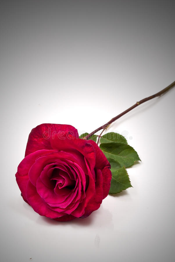 Romance On A Stem Royalty Free Stock Photo