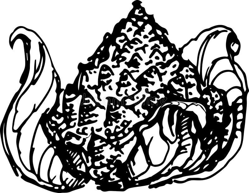 Romanesco Ilustración del vector stock de ilustración