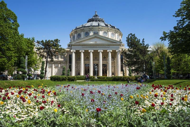 Romanian Atheneu em Bucareste imagem de stock