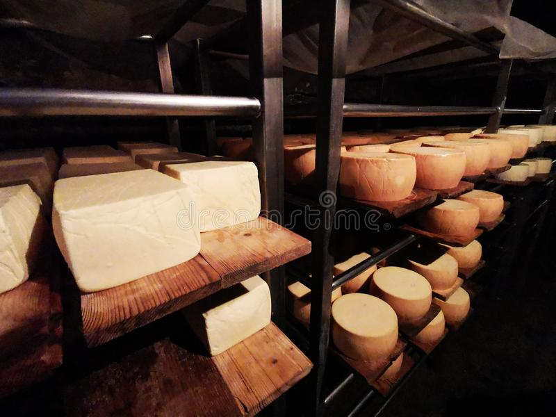 Romanian cheese Nasal on metal shelves in the grotto. Nasal cheese is a specialty unique in the world due to its special taste, likened Camembert cheese, a fact stock image