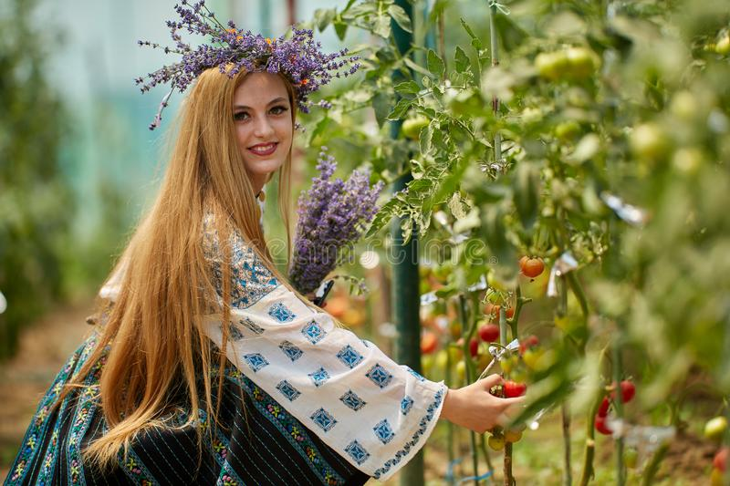 Romanian girl in costume in the hothouse. Romanian girl in traditional costume picking tomatoes in the hothouse stock photos