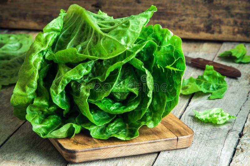 Romano orgânico maduro da salada verde fotografia de stock