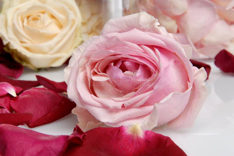 Romantic Beautiful pink and white roses Petals wit. Romantic Beautiful pink and white flowers in spa hotel wedding, Petals, candle stock image