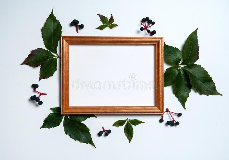 Wooden photo frame, green leaves and blue grapes on Parthenocissus white background. stock images