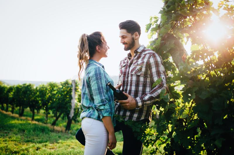 Cute young couple in vineyard before harvesting royalty free stock image