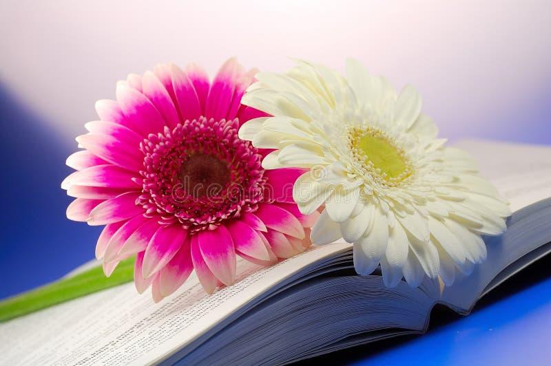 Romantic daisy royalty free stock photos