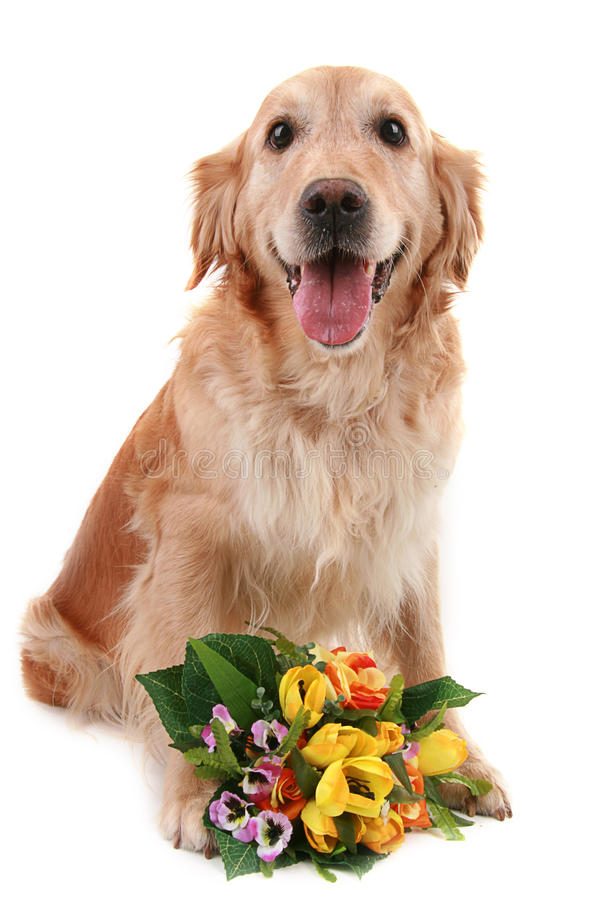 Download Romantic dog stock image. Image of flowers, present, couple - 10690195