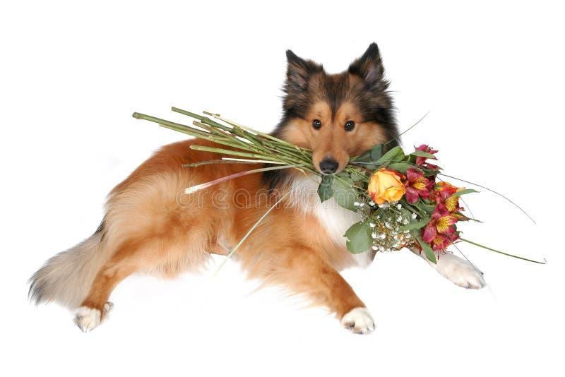 Romantic dog 7 stock images