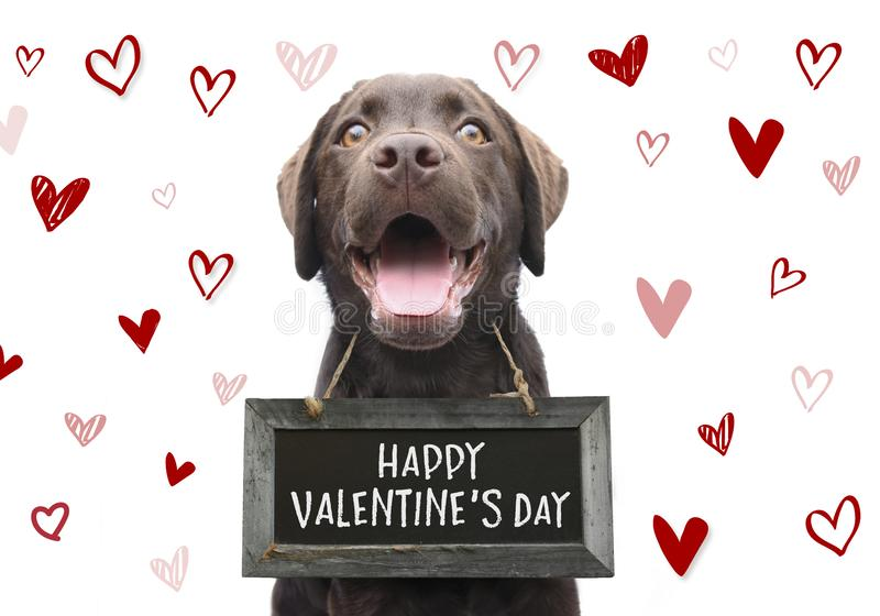 Romantic dog with text happy valentines day on wooden board with cute hand drawn hearts on white background for 14 february. Cute labrador dog wishes you a happy stock photo