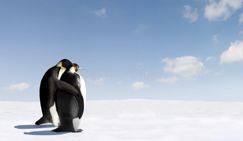 Romantic Emperor Penguins Stock Photo