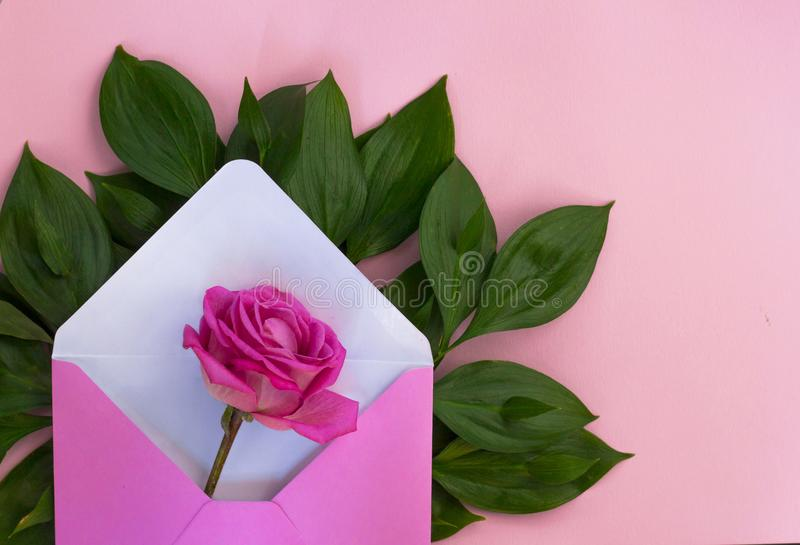 Romantic envelope.Rose flower.Love gift. Pink background royalty free stock photo