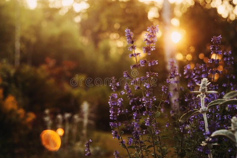 Romantic evening floral summer backround. Gentle toned blurred view with blooming flowers. And space for text stock photos