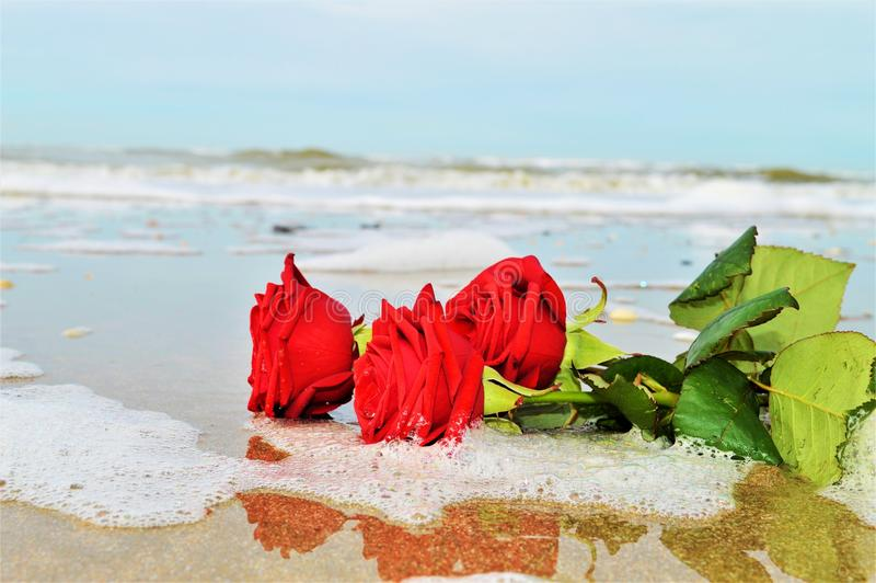 Romantic expectations. Red roses on the sand, in the foam of a wave, suggesting romanticism, love and love expectations royalty free stock images