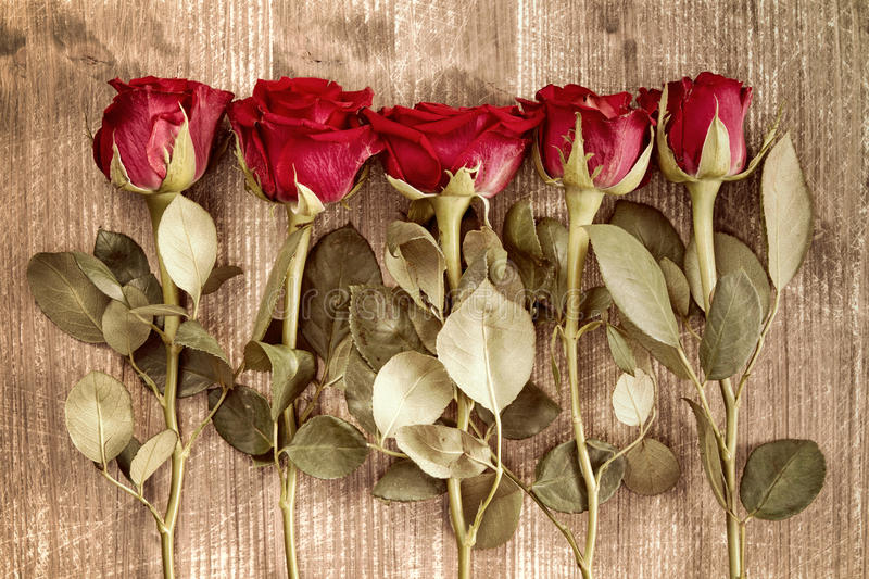 Romantic floral background stock photo