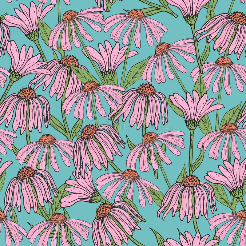 Romantic floral seamless pattern with beautiful echinacea flowers, stems and leaves on blue background. Flowering herb vector illustration