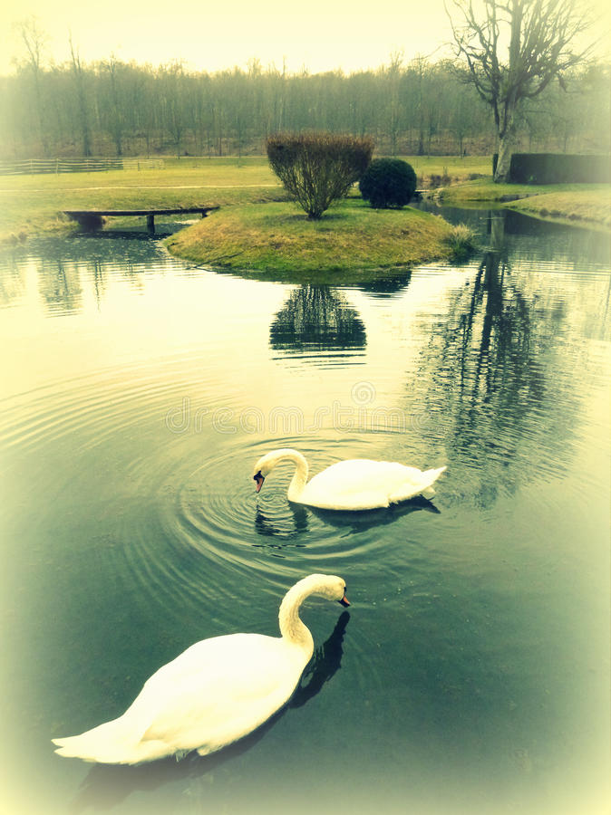 Romantic garden with swans royalty free stock photos