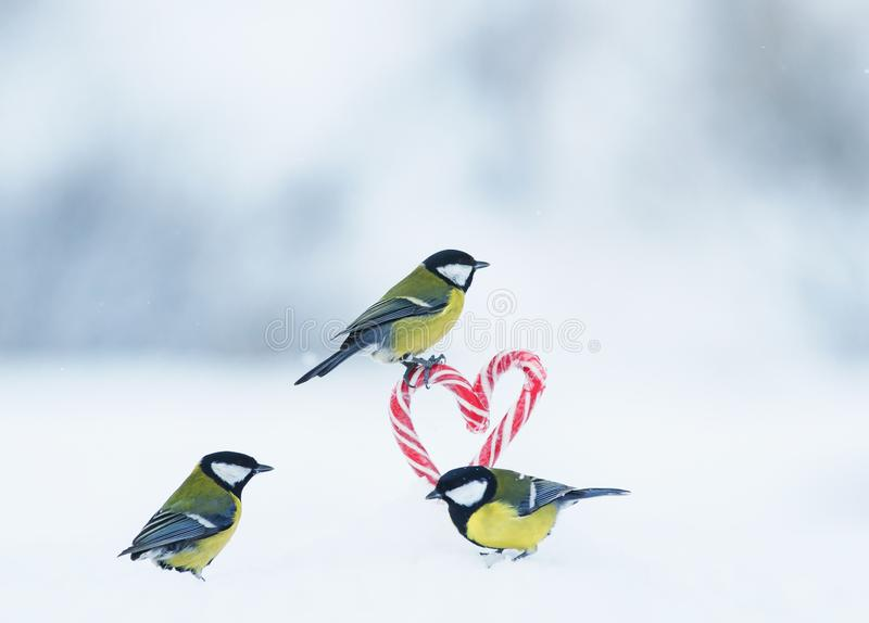 Romantic greeting card with several cute singers birds flew to the red lollipops in the side of the heart in white snow on. Romantic greeting card with several stock photo