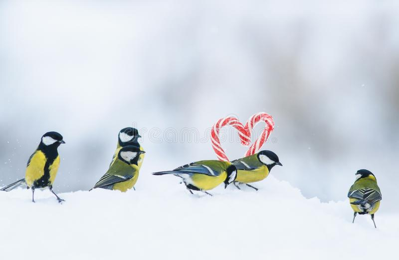 Romantic greeting card with several cute singers birds flew to the red sweet lollipops in the side of the heart in white snow on. Several cute singers birds flew stock photo