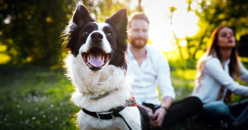 Romantic happy couple in love enjoying their time with pets. In nature stock image