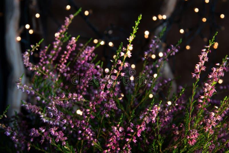 Romantic Heather flowers royalty free stock photos