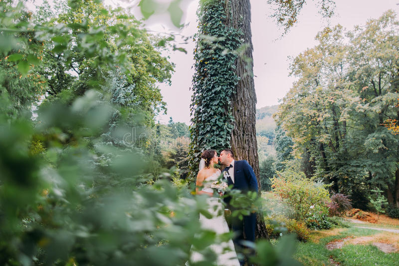 Romantic just married couple kissing under high tree in park stock image