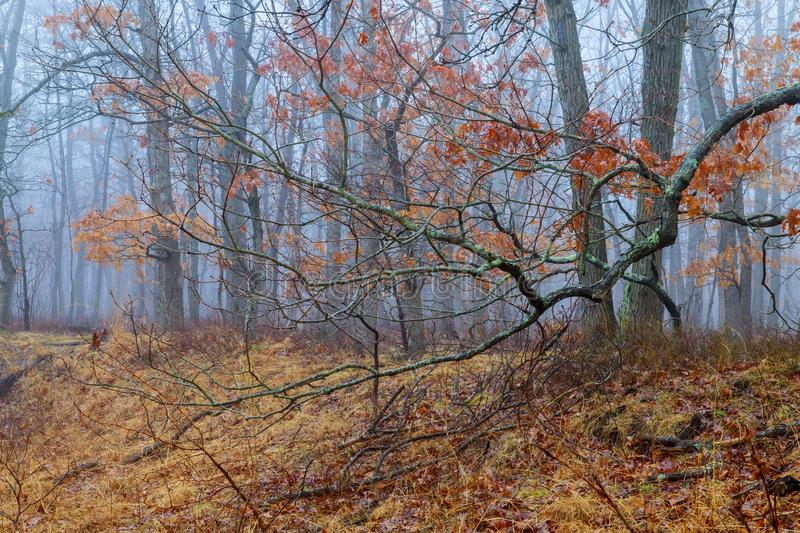 Romantic light through the fog shines on the trail in misty forest, during autumn day royalty free stock photography