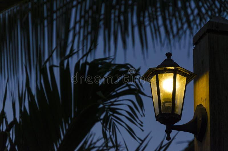 Romantic light under palm tree stock photos