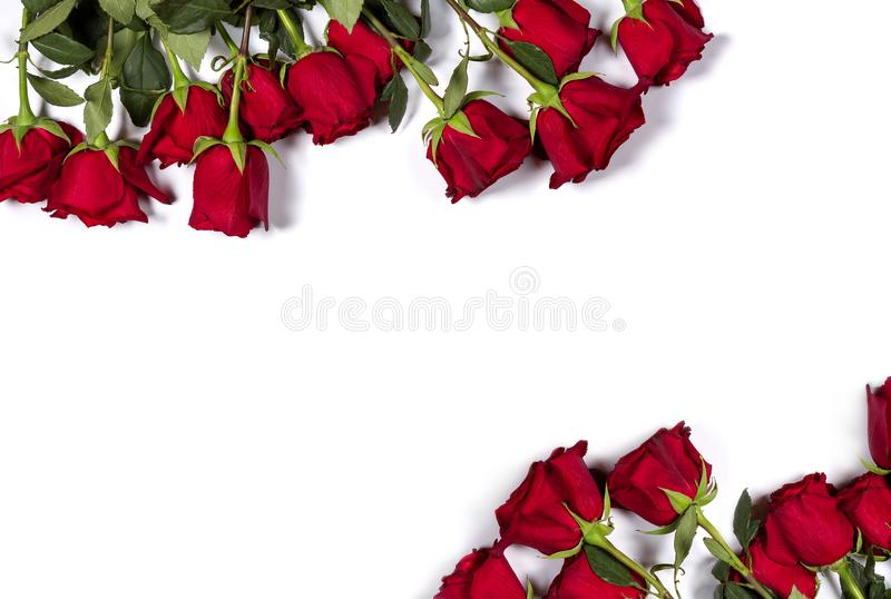 Romantic mockup. Floral frame made of beautiful large red roses on white background. Space for your text. Top view stock image