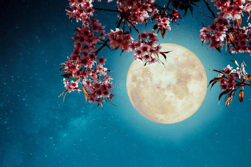 Romantic night scene - Beautiful cherry blossom sakura flowers in night skies with full moon. Retro style artwork with vintage color tone royalty free stock photos