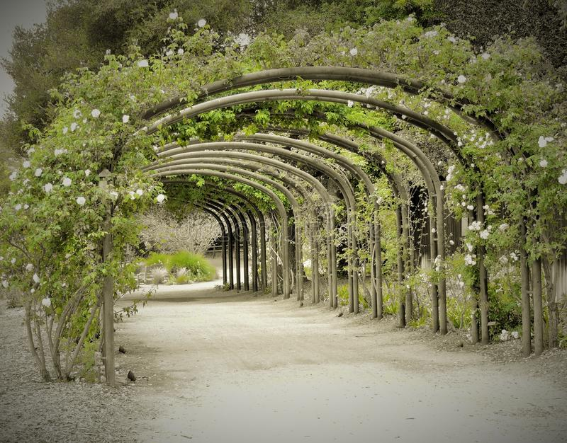 Romantic old- fashioned rose tunnel stock photo