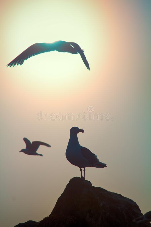 Seagulls against sky with sun in haze. Romantic picture, art of flight. Seagulls against sky with sun in haze. Bird of dreams concept, luck, chance, high-flier stock image