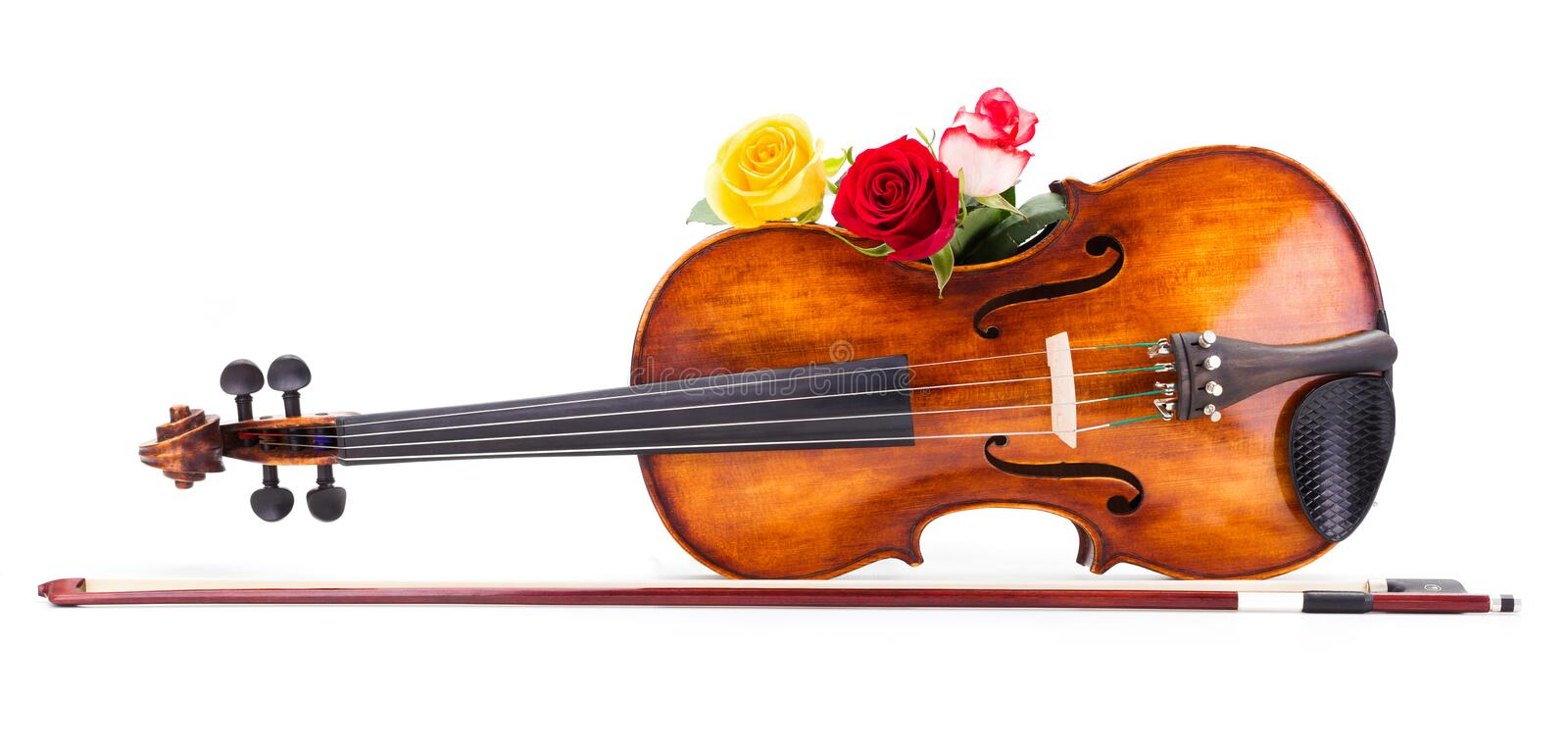 Roses on violin stock photos