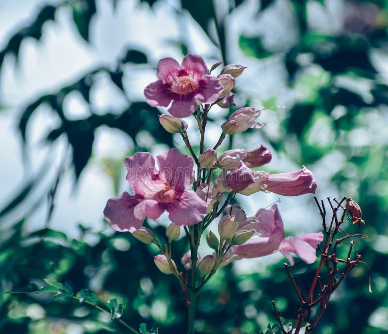 Bokeh Flowers Wedding: Hawaiian Wedding Flower Bokeh Stock Photo