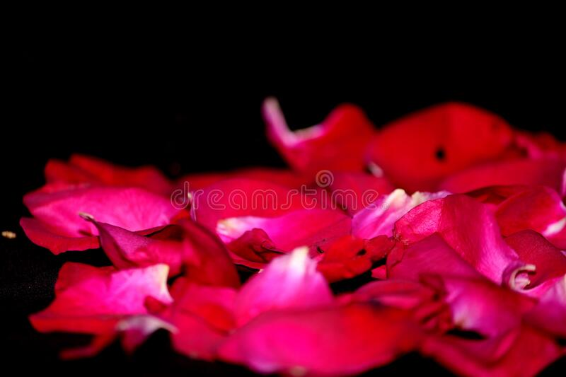 Romantic proposal, Red rose put on mobile. Beautiful romantic proposal, Red rose put on mobile valentine gift, love Decorative background on black royalty free stock photo