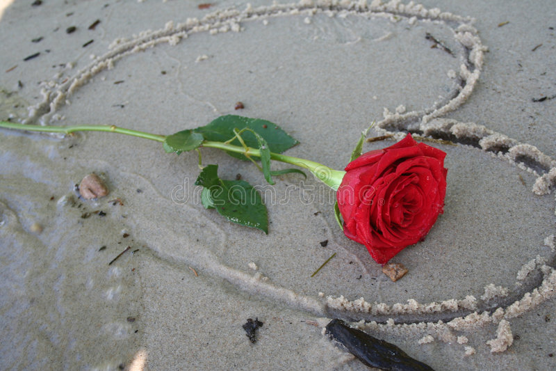 Romantic Red Rose. Single red rose laying on a beach shore stock images