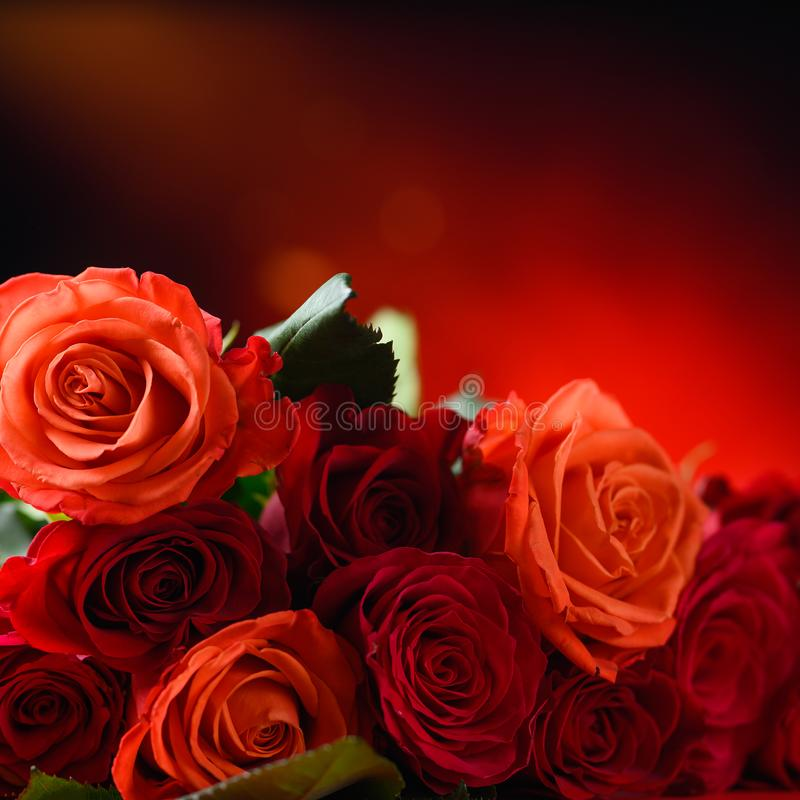 Romantic red roses on a bright background with hearts, Valentine`s day, love and romance, wedding background. Square photo for. Instagram stock photo