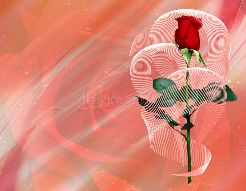 Download Romantic rose stock illustration. Image of decoration - 12159359