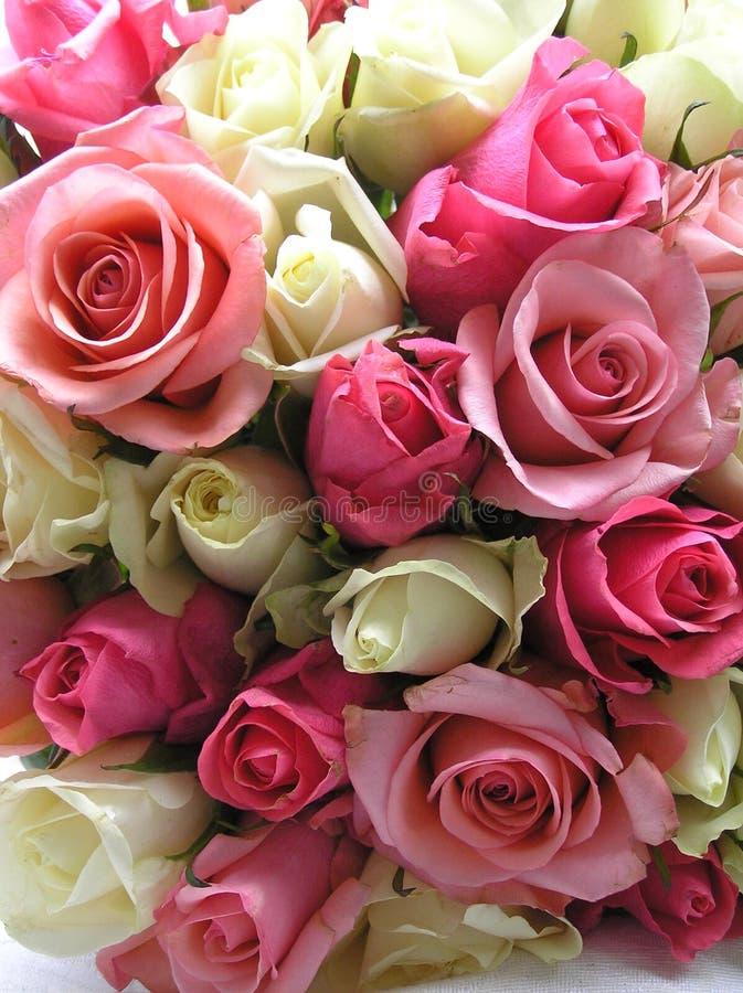 Romantic roses stock photos