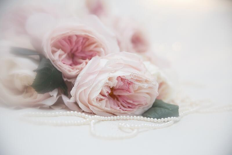 Romantic roses with pearl necklace. Wedding invitation. royalty free stock photos
