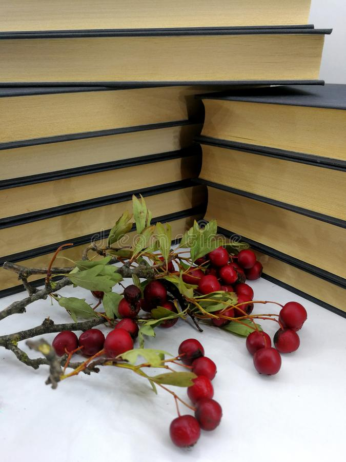 Romantic scene with books and red berries royalty free stock image