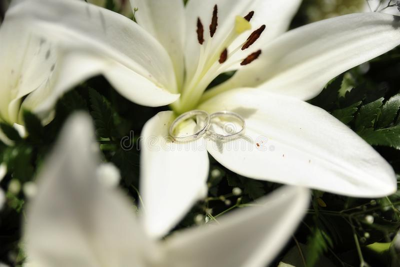 Romantic setup with wedding rings set on large white lily royalty free stock photo