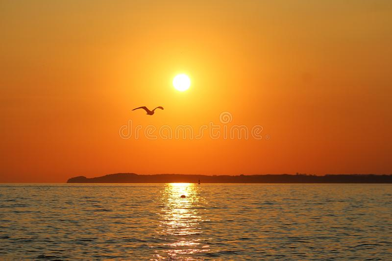 Beautiful romantic sunrise in north germany with the sun and a flying seagull stock image