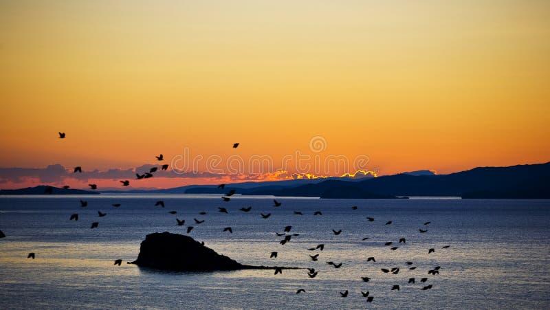 Romantic sunrise over the Baikal Lake with birds stock photography