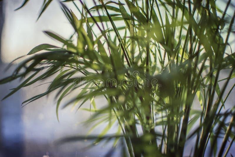 Romantic sunset palm leaves on my window stock photos