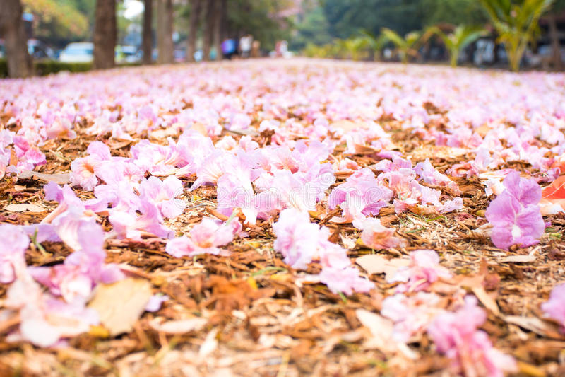 Romantic way of pink flower on the floor. Love concept royalty free stock photography