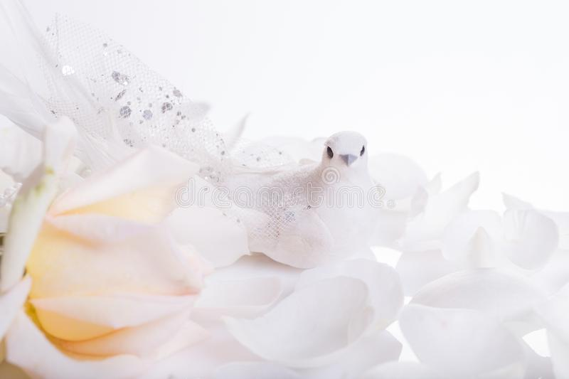Romantic wedding background. White dove and white rose, a symbol of peace and love. royalty free stock image