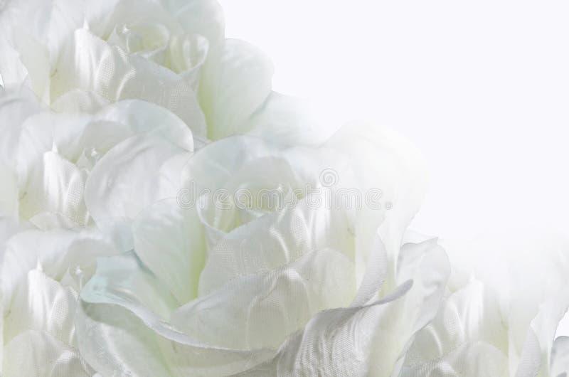 Romantic white roses. On white background royalty free stock image