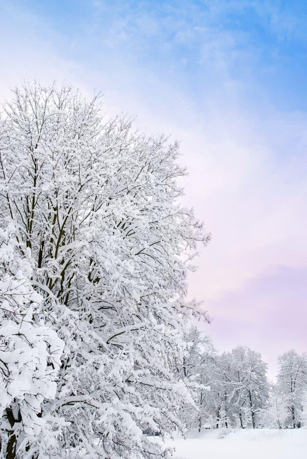 Romantic winter royalty free stock photography
