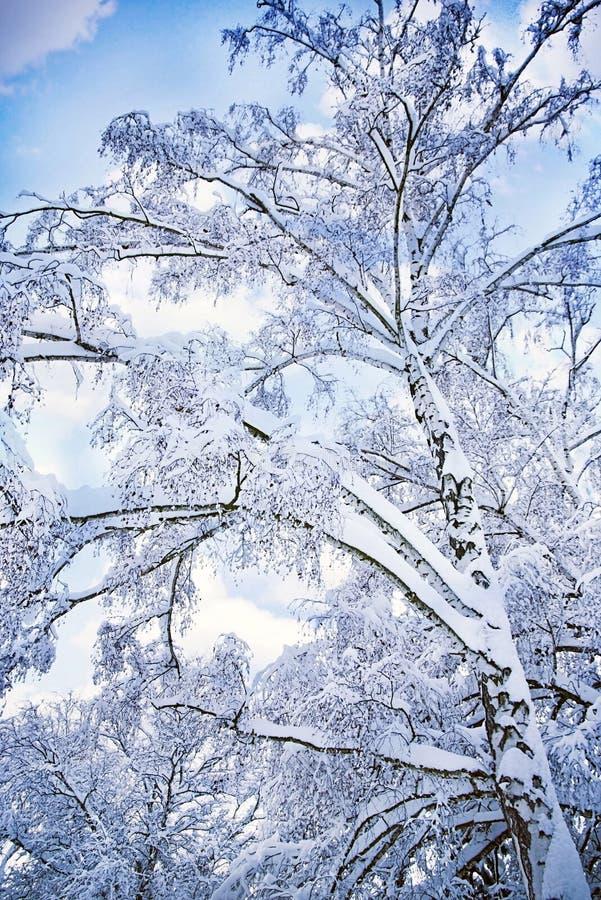 Romantic winter royalty free stock photo